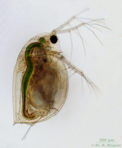 Naturdetektiv-Klub Blick in eine andere Welt - Mikroskopie @ im Abenteuerland Teuflibach