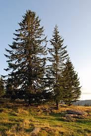 Naturdetektiv-Klub Baumwerkstatt Nadelbäume @ im Abenteuerland Teuflibach
