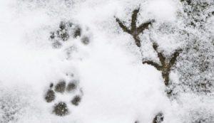 Naturdetektiv-Klub Tierspuren @ im Abenteuerland Teuflibach