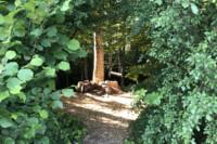 Waldschaukel